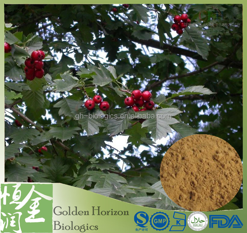 Factory Supply High Quality Natural Hawthorn Berry Extract 10:1