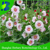 Hollyhocks seeds, different kinds of flower seeds with high germination rate and low price