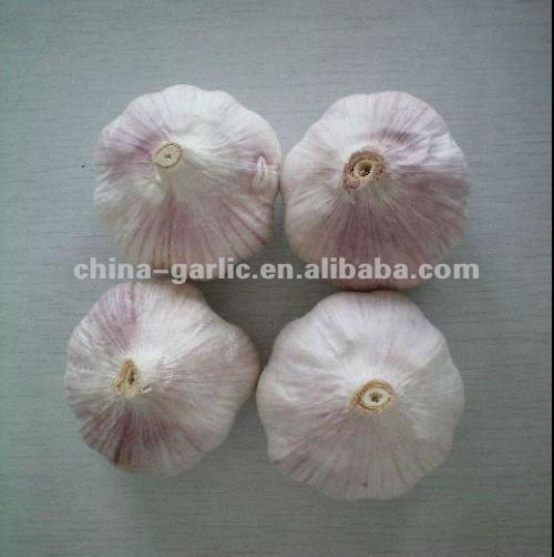 Sell China Fresh Red / Purple Garlic - new crop season