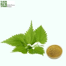 Herbal Extract Stinging Nettle Root Extract 4:1
