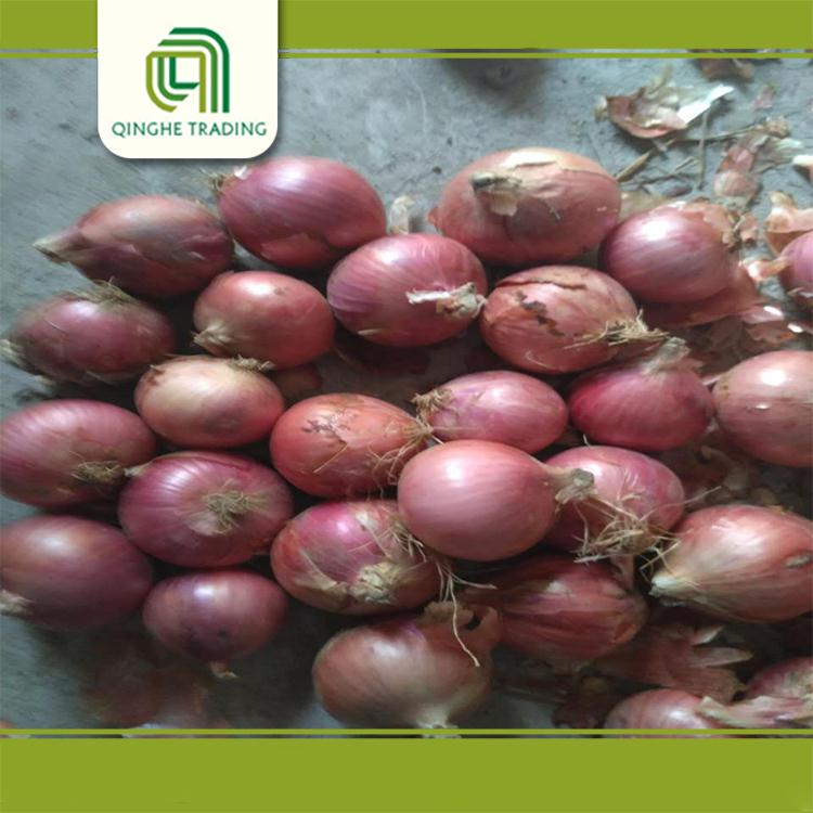 Hot selling red onion importers in singapore from china