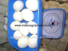 White Eggs Price in India