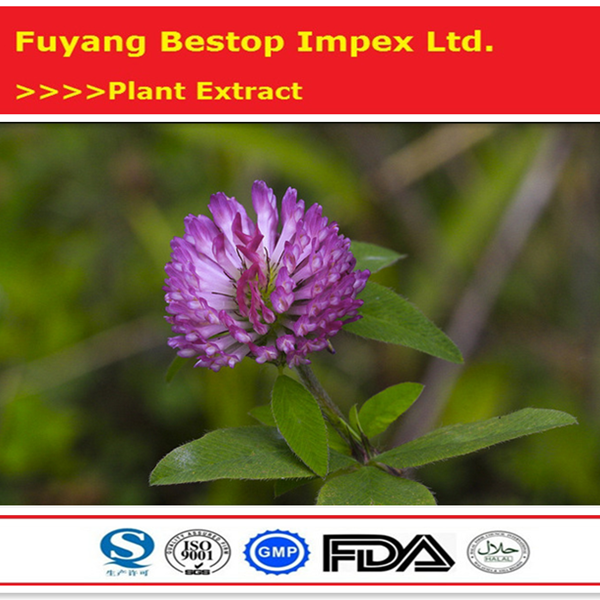 Hong Che Zhou Pure natural Natural health food Free Sample Red Clover Extract