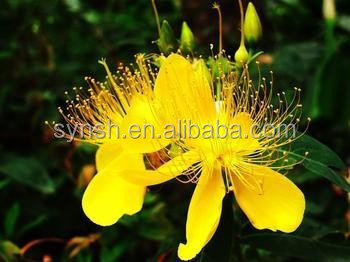 GMP certificate natural Weeping Forsythia Extract