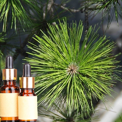 High Quality Pure & Natural Pine Oil Essential Oil