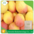 Powder State Ethylene Ripener for fruits like mango