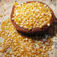 Fcatory wholesale Bulk sweet and hot sale popcorn seed