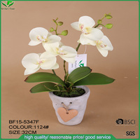 popular mini orchid with loving heart pot