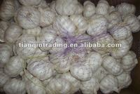 2012 china white garlic price
