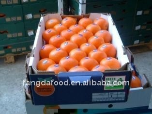 varieties size chinese navel orange
