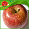 red delicious apples high quality chinese fuji apple red chief apple