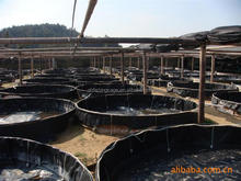 plastic water tanks for tilapia fingerlings