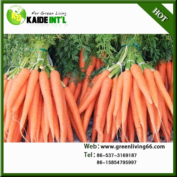 Oganic Bulk Carrots For Market