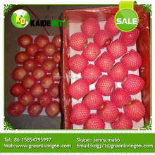 product specification factory red mature fresh fuji apples for sale