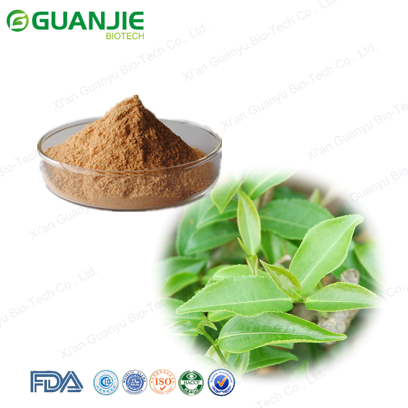 Natural plant extract tea polyphenols powder green tea extract