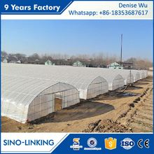 SINOLINKING Agricultural polytunnel high tunnel greenhouse for vegetable fruits