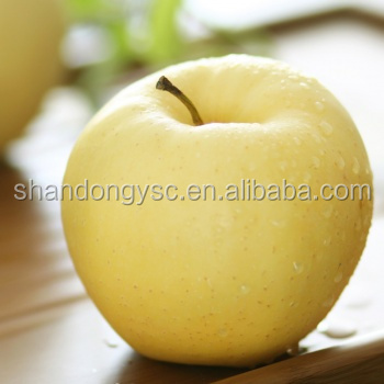 golden delicious apple import apple fruit from China factory supplier