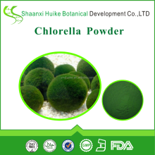 Kosher and Halal Chlorella Algae Powder in Bulk as Food Grade