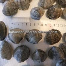 frozen cooked short necked baby clams