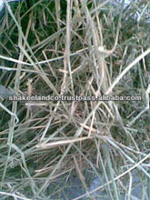 High Quality Best Selling Alfalfa Hay Bales