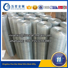 galvanized welded wire mesh (Dingzhou Five-Star Factory)