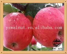 Bulk Fresh Organic Apples Export