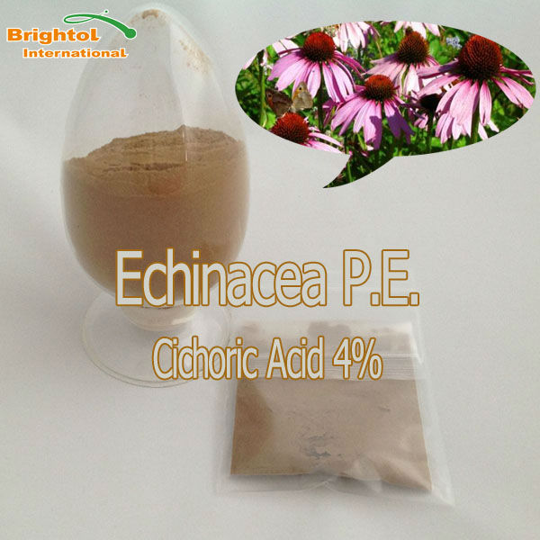 Top Quality Echinacea herb extract 4% Polysaccharides