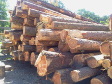 European Larch logs and lumber KD 10-12% ,S4S Grade and European wood logs