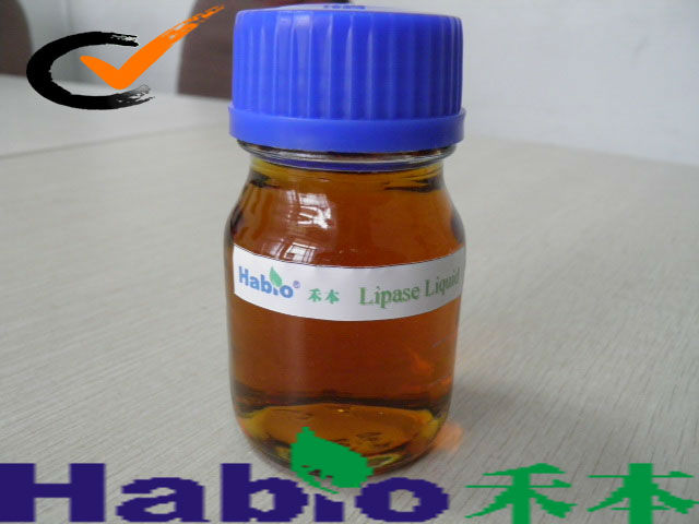 New!!! Lipase specialized for Biodiesel