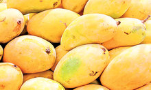 MANGO EXPORTERS / SUPPLIERS FROM PAKISTAN