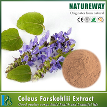 100% natural coleus forskolin extracts powder,coleus forskohli extract
