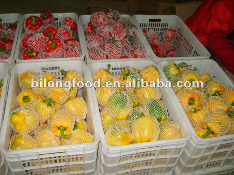 2016 new crop fresh capsicum (china)