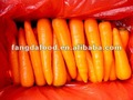 new crop Chinese 316 carrot