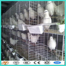 galvanized wire mesh panels for racing breeding pigeon cage