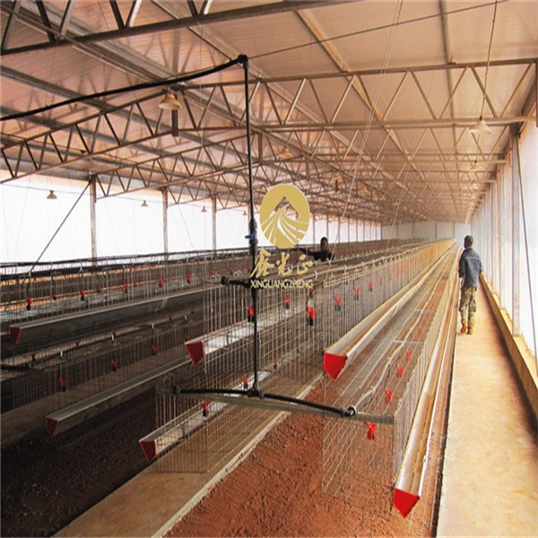 Steel Structure Automatic Poultry Egg Layer Farm