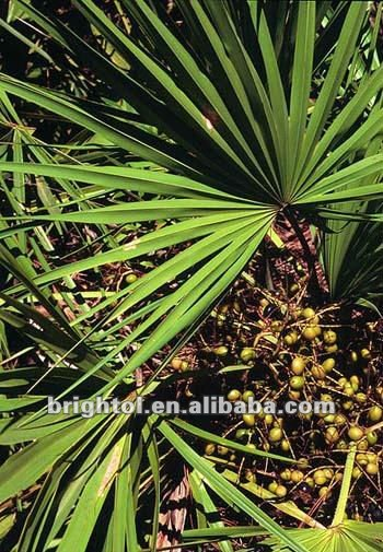 High quality Saw Palmetto P.E. 61788-66-7