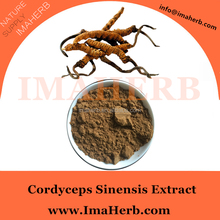 Top Grade Nature reishi cordyceps price