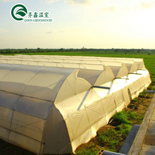 Multi-span Film Agriculture Greenhouse For Tomato Cucumber Lettuce