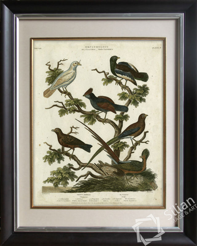 Ornithology II Wall Art Picture Of Frame