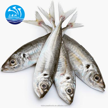 Wholesale Frozen Horse Mackerel with Good Price