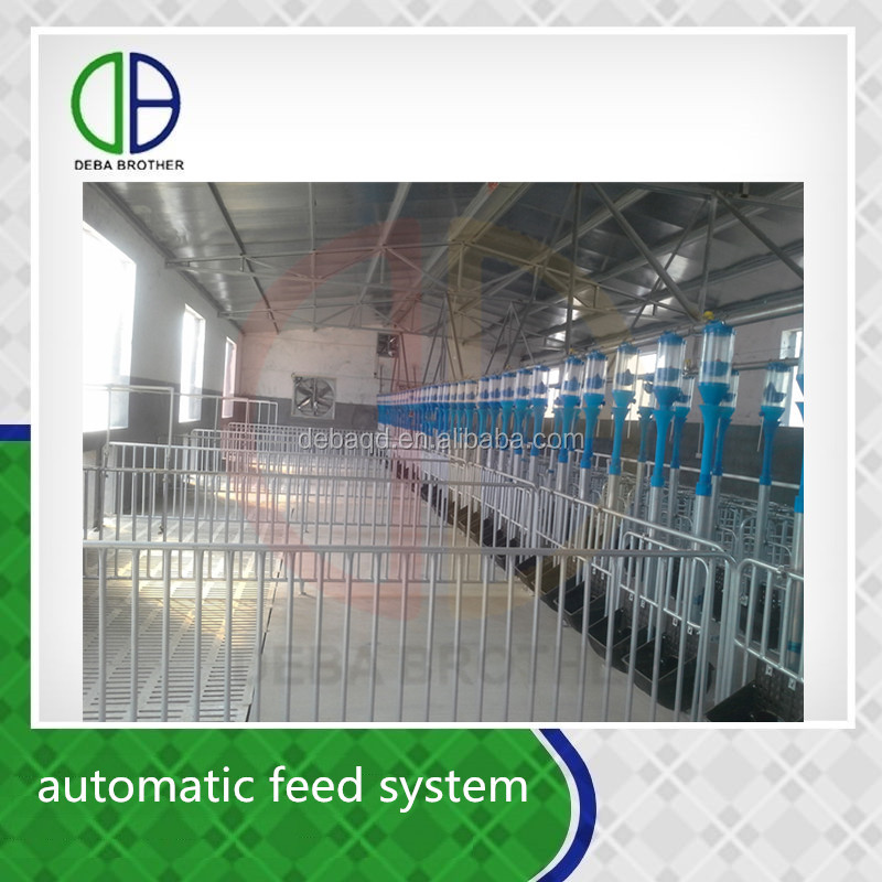 Modern pig farm saving time and labor auto feeding system for pig nursery