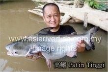 FRESH FROZEN PATIN TINGGI / KOU KIEW FISH