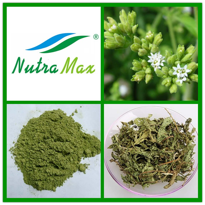Hot Sell Stock available Organic Stevia Extract Powder SG 75% RC 30% with Best Price