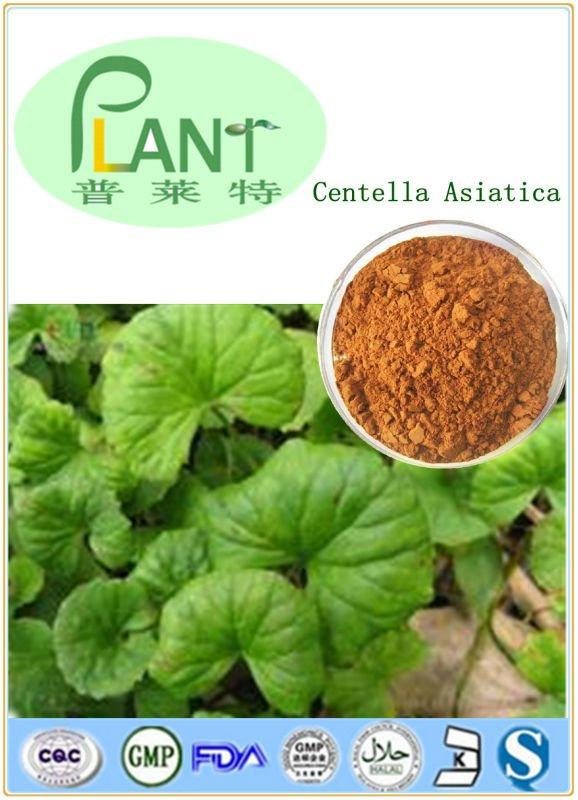 gotu kola extract powder /asiaticosides