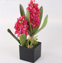 Two plants of red silk hyacinth flower with black plastic pot