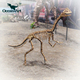 OAH5162 Life Size Dinosaur Skeleton Animal Fossil Replica