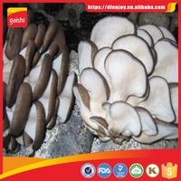 Wholesale oyster mushroom in brine