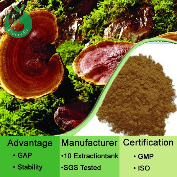 Organic Reishi Extract/100% Natural Reishi Mushroom Extract/Red Reishi Extract