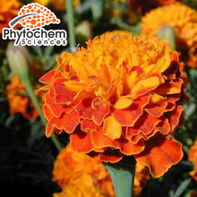 Natural ingredients marigold flowers 20% Lutein (Xanthophyll)