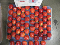 FRESH GALA APPLES USA ORIGIN